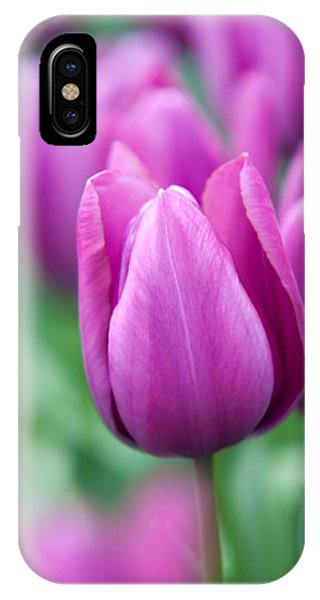 Purple Tulips Of Keukenhof IPhone Case