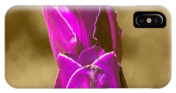 Purple Tulips Sepia Background IPhone Case
