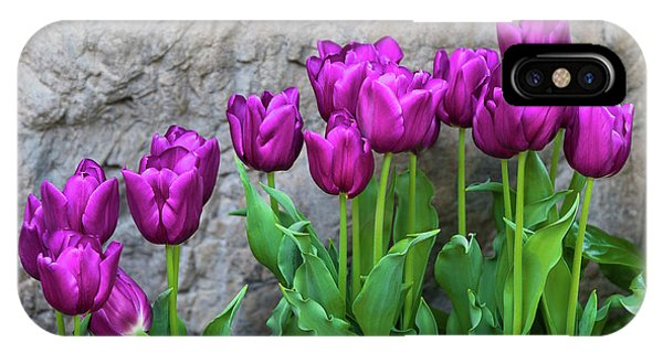 Tulip iPhone X / XS Case - Purple Tulips by Tom Mc Nemar
