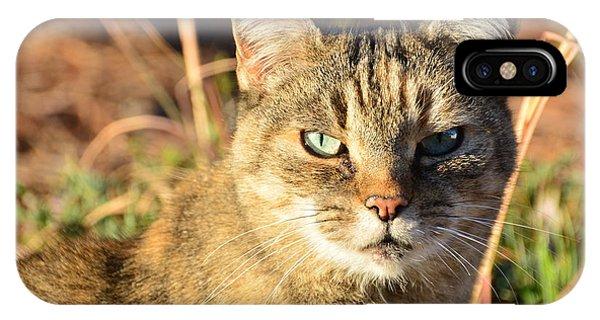 Purr-fect Kitty Cat Friend IPhone Case