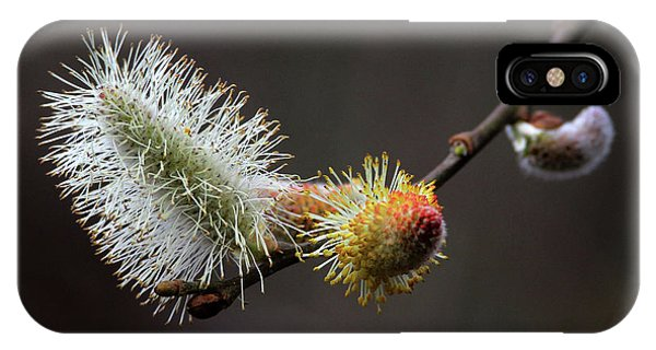 Pussy Willow Stony Brook New York IPhone Case