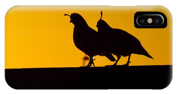 Quail At Sunset IPhone Case