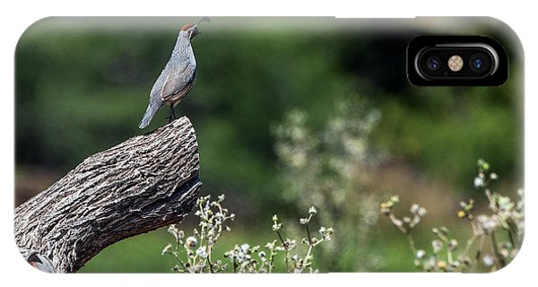 IPhone Case featuring the photograph Quail Watching by Tam Ryan
