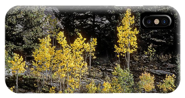 Aspens In Fall At Eleven Mile Canyon, Colorado IPhone Case