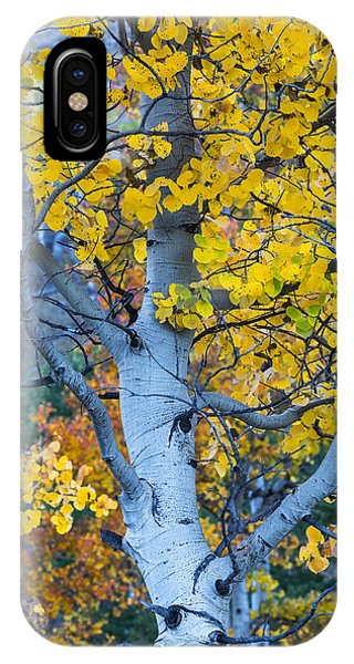IPhone Case featuring the photograph Quaking Aspen by Gary Lengyel