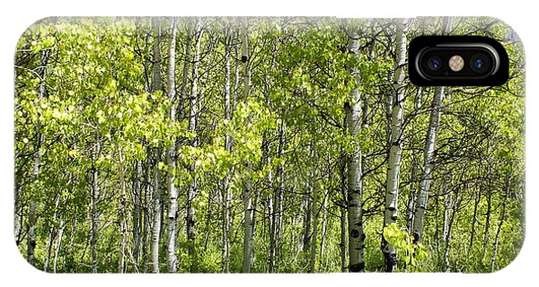 Quaking Aspens 2 IPhone Case