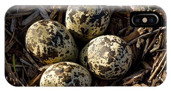 Killdeer iPhone Case - Quartet Of Killdeer Eggs By Jean Noren by Jean Noren