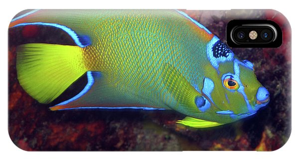 Queen Angelfish, U. S. Virgin Islands 2 IPhone Case