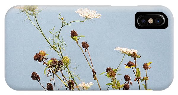 Queen Anne's Lace And Dried Clovers IPhone Case