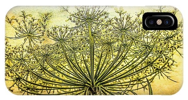 Queen Anne's Lace At Sunrise IPhone Case