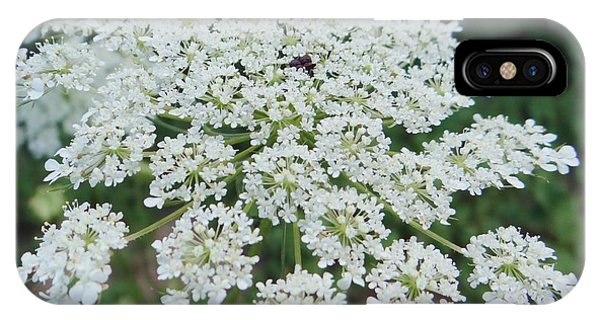 Queen Ann's Lace 2 IPhone Case