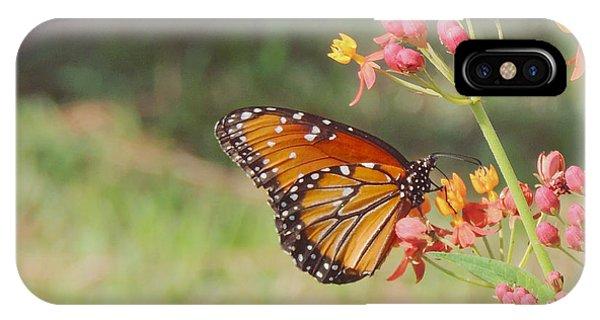 Queen Butterfly On Milkweed IPhone Case