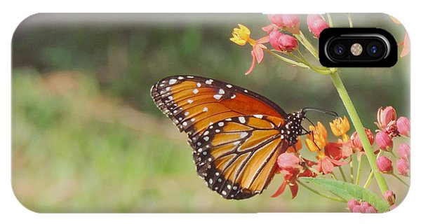 Queen Butterfly On Milkweed IPhone Case