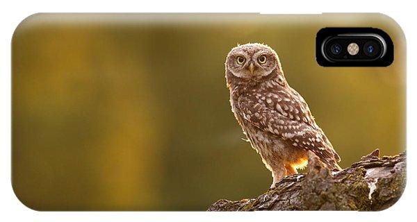 Qui, Moi? Little Owlet In Warm Light IPhone Case