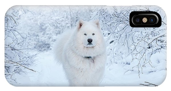 Quinn The Mighty Samoyed IPhone Case