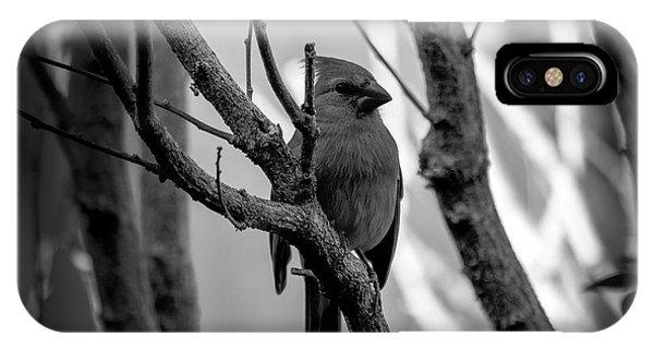 Quite Bird In The Tree IPhone Case