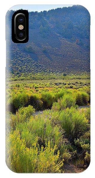 Rabbit Brush In Bloom IPhone Case