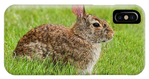 Rabbit In A Grassy Meadow IPhone Case