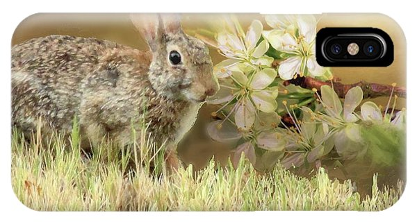Eastern Cottontail Rabbit In Grass IPhone Case