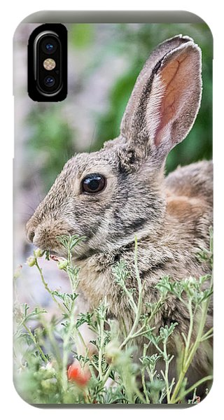 IPhone Case featuring the photograph Rabbit Munching Lunch by John Brink