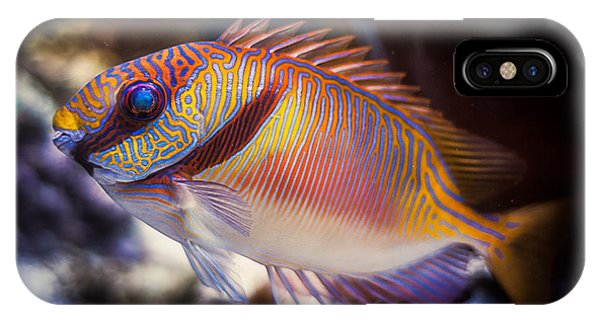Rabbitfish IPhone Case
