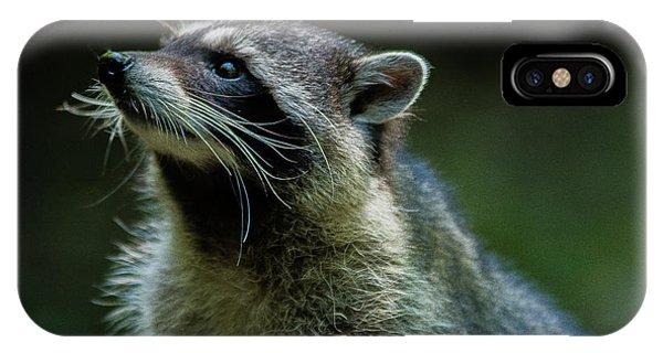 Raccoon 1 IPhone Case