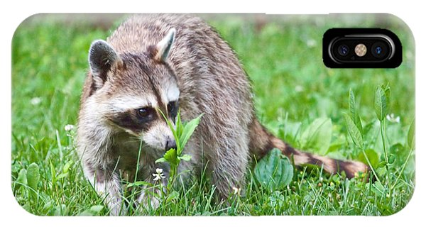 Raccoon Smelling Flowers IPhone Case