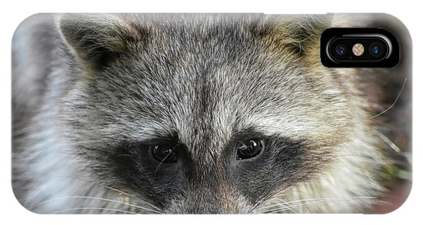 Raccoon's Gorgeous Face IPhone Case