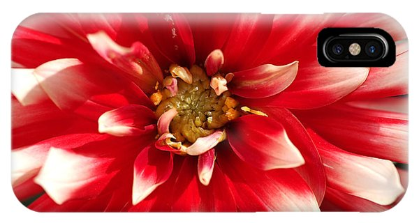 Radiant Dahlia IPhone Case