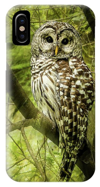 Radiating Barred Owl IPhone Case
