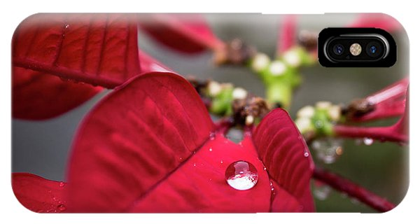 Rain Drop On A Poinsettia  IPhone Case