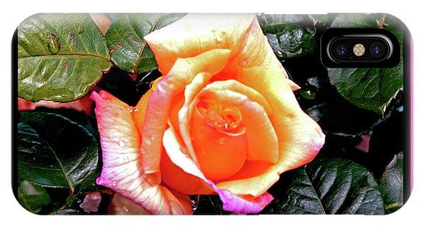 Rain Drops On A Rose IPhone Case
