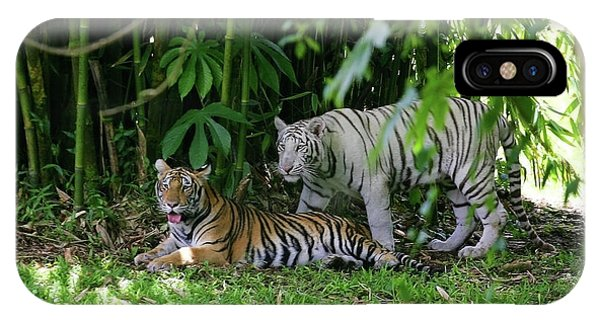 Rain Forest Tigers IPhone Case