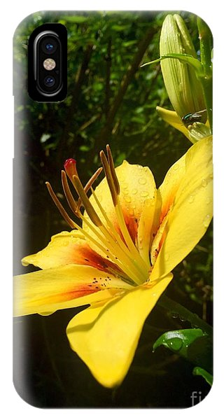 Rain Kissed Tiger Lily IPhone Case