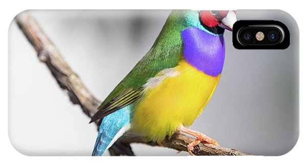 Rainbow Finch IPhone Case