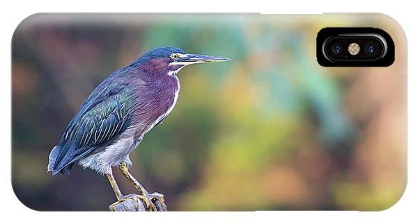 Rainbow Heron IPhone Case