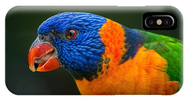 Rainbow Lorikeet IPhone Case