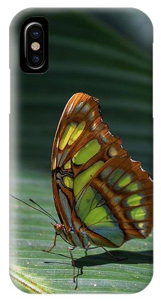 Rainforest Butterfly IPhone Case