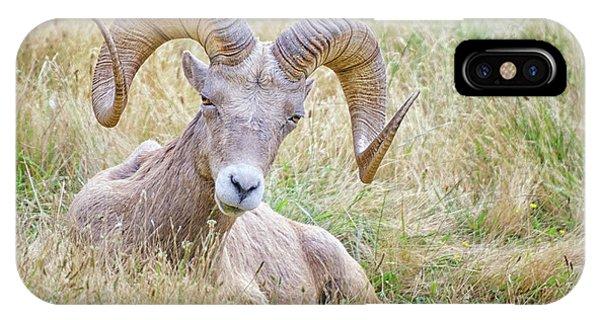Ram In Field IPhone Case