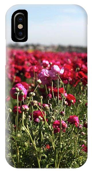 Ranunculus Field IPhone Case