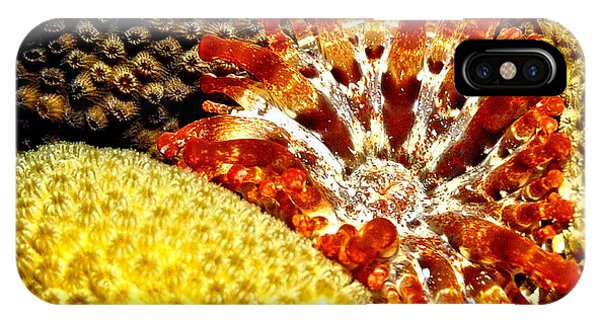 Rare Orange Tipped Corallimorph - Fire In The Sea IPhone Case