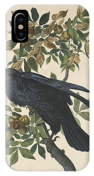 Raven iPhone Case - Raven by Dreyer Wildlife Print Collections