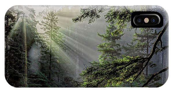Rays Through An Oregon Rain Forest IPhone Case