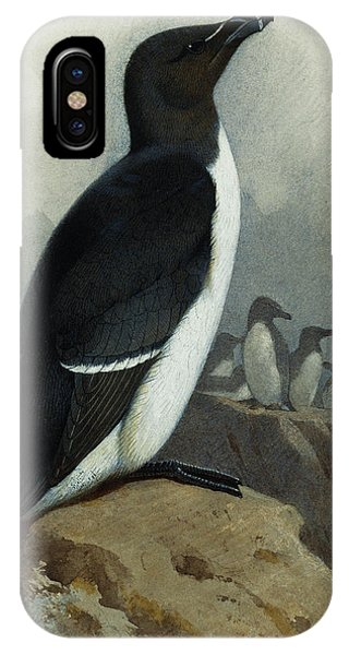 Razorbill iPhone Case - Razorbill by Archibald Thorburn