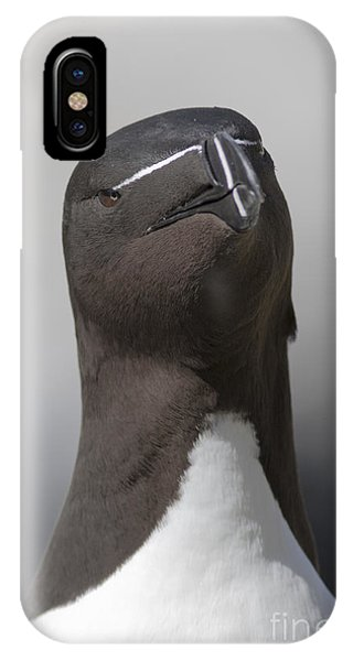 Razorbill iPhone Case - Razorbill by Karen Van Der Zijden