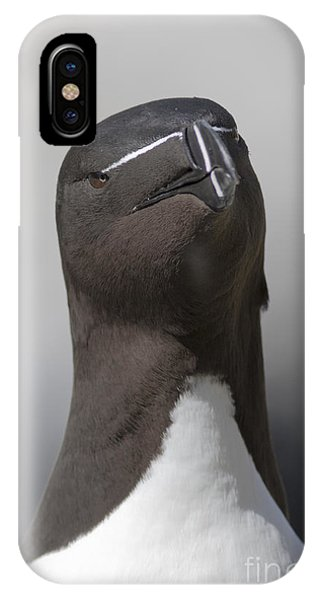 Razorbill IPhone Case