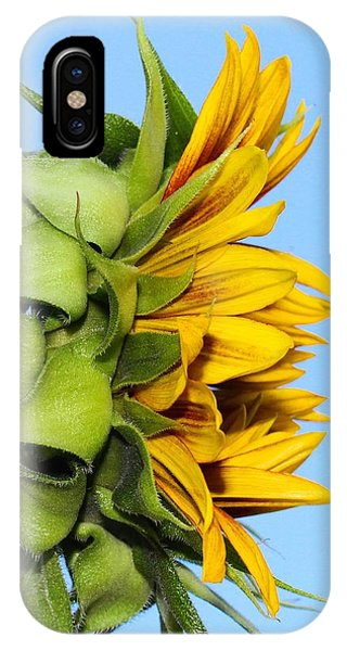 Reaching Sunflower IPhone Case