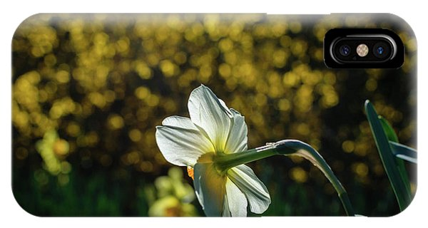 Rear View Daffodil IPhone Case