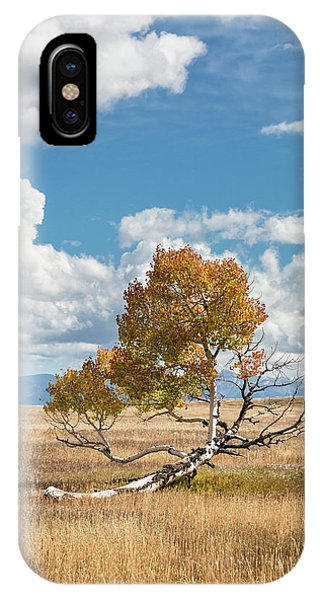 IPhone Case featuring the photograph Reclining In The Sun by Denise Bush