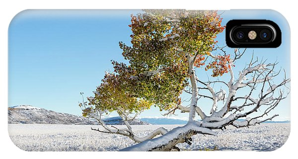 IPhone Case featuring the photograph Reclining Tree With Snow by Denise Bush